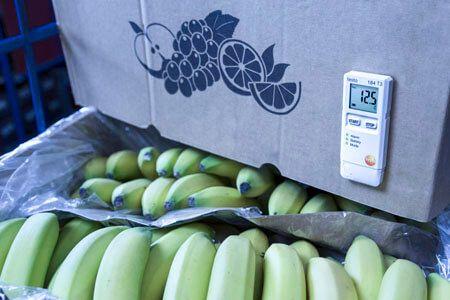 Vận chuyển thực phẩm dùng máy ghi đo nhiệt độ và độ ẩm Testo 184 H1